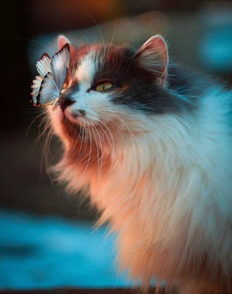perfectly-timed-animal-photos-12.jpg