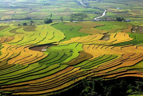 mu-cang-chai-vietnam-travel-guide.jpg
