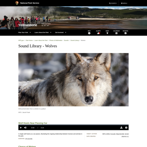 Sound Library - Wolves - Yellowstone National Park (U.S. National Park Service)