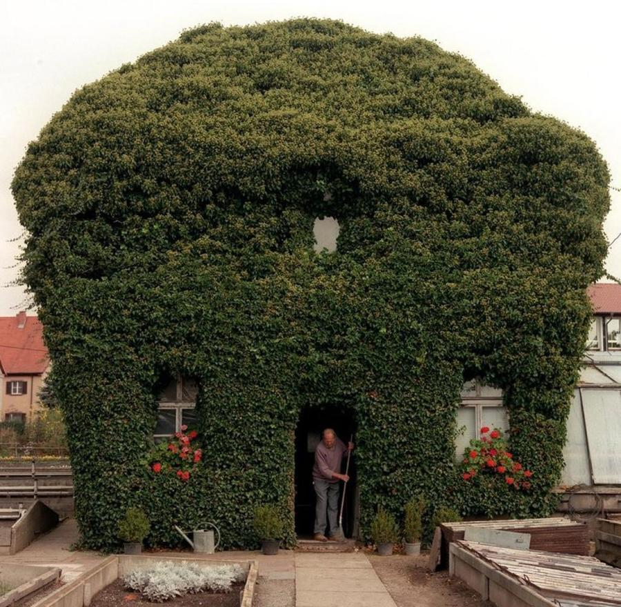 Ivy covered house (Hammelburg, Germany) by Wolf-Dietrich Weissbach
