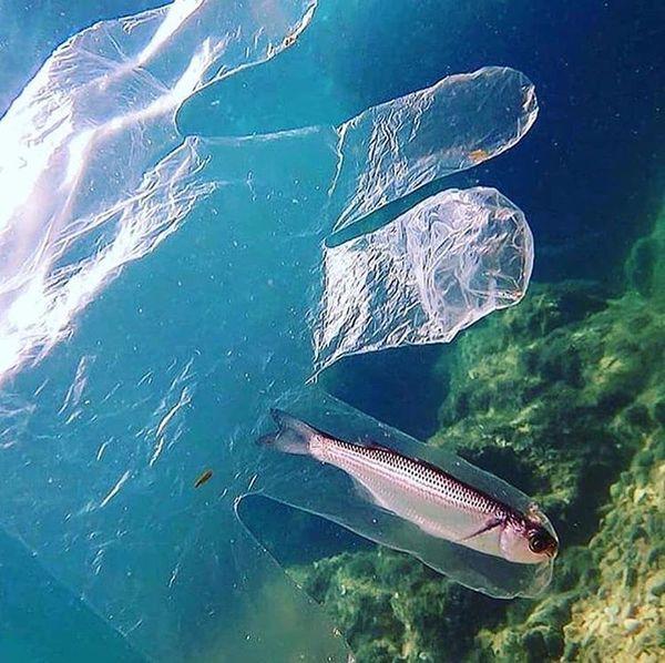 Fish caught in plastic glove