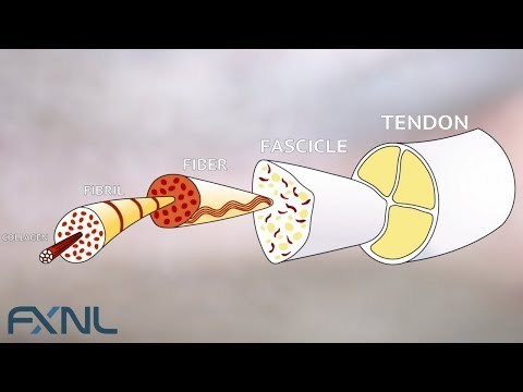 Tendinitis, Tendinosis, Tendinopathy? Exercise is the best medicine for tendon pain.