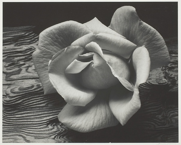 Ansel Adams. Rose and Driftwood, San Francisco, California, 1932