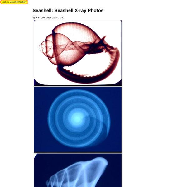 Seashell X-ray Photos