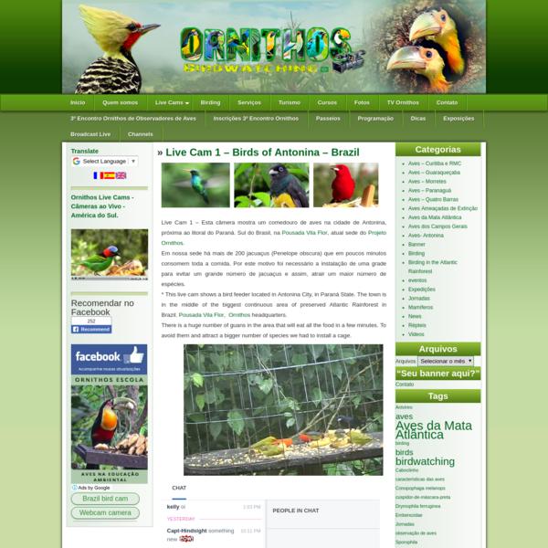 "Live Cam 1 - Birds of Antonina - Brazil "" Ornithos - Birding Brazil - Birdwatching at the Atlantic Forest of Brazil's South ..."