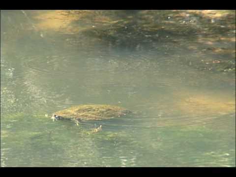 WM3 Robin Hood Hills Turtle 2009