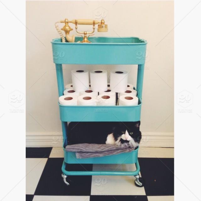 stock-photo-bathroom-cat-cats-animal-animals-cute-fb74e966-7571-4108-a4e6-5909217cfe8e.jpg