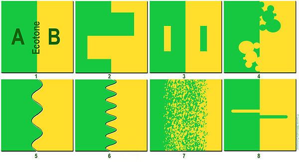 Ecotone Visualization