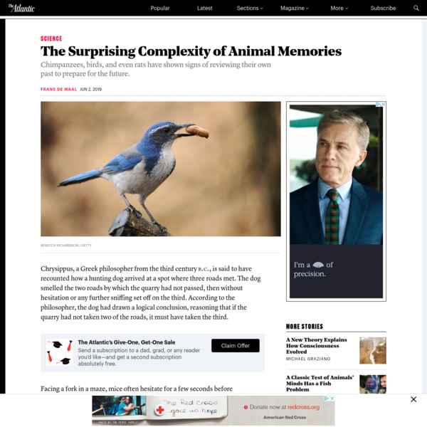 The Surprising Complexity of Animal Memories