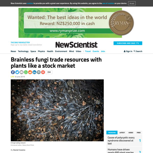 Brainless fungi trade resources with plants like a stock market | New Scientist