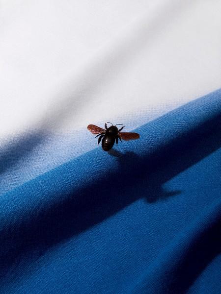 lonnekevanderpalen_vrijnederland_insecten_01.1200x0.jpg