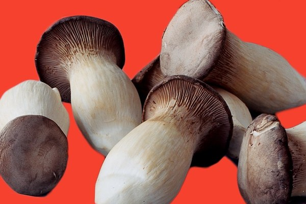 king-trumpet-mushrooms-050418.jpg