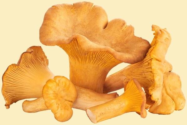 chanterelle-mushrooms-050418.jpg