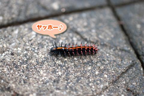 tsumagurohyoumon_090213.jpg