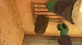 traditional beekeeping in Japan - YouTube