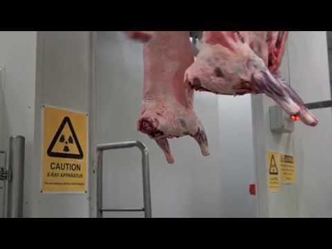 Automated Lamb Processing at JBS Bordertown