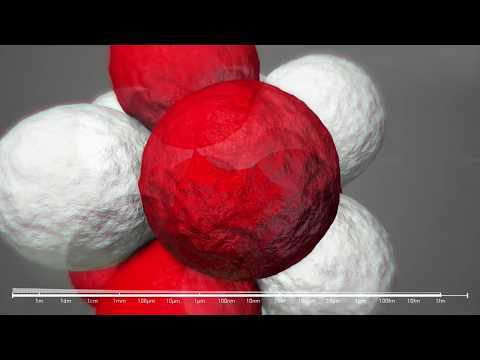 Voyage into the world of atoms