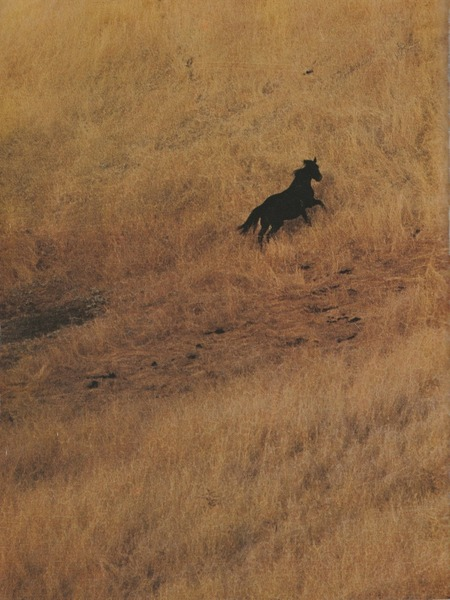 wild-horses-landscape.jpg