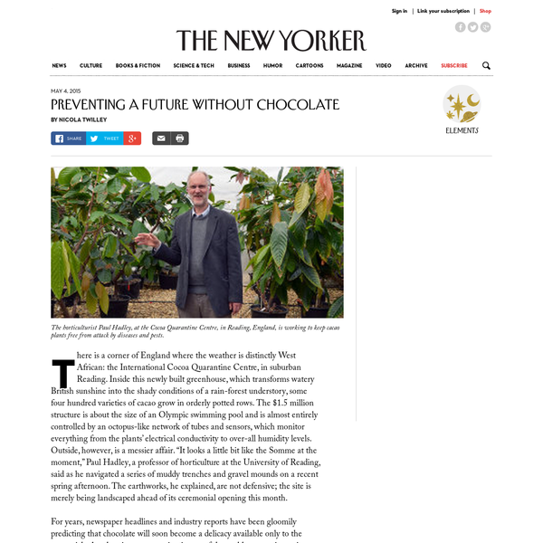 There is a corner of England where the weather is distinctly West African: the International Cocoa Quarantine Centre, in suburban Reading. Inside this newly built greenhouse, which transforms watery British sunshine into the shady conditions of a rain-forest understory, some four hundred varieties of cacao grow in orderly potted rows.