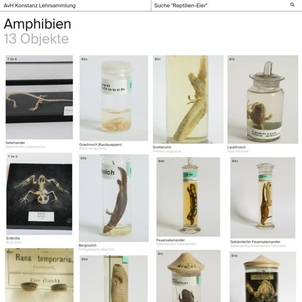 Classes Amphibien - AvH Konstanz Lehrsammlung