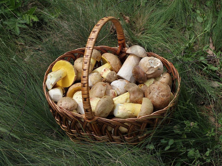 1280px-edible_fungi_in_basket_2012_g1.jpg