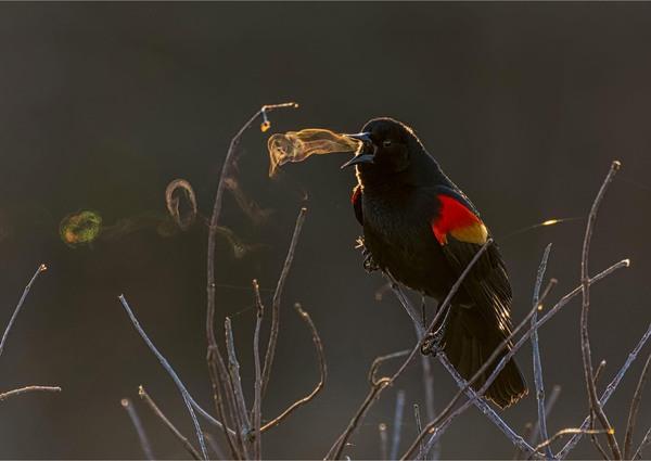 audubon-2019-01.jpg