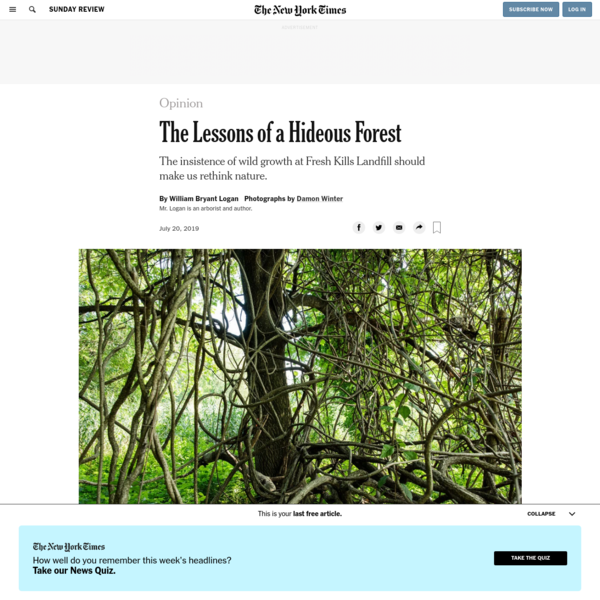 Opinion   The Lessons of a Hideous Forest