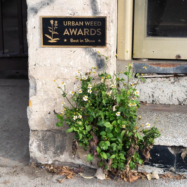 weed-award-2.jpg