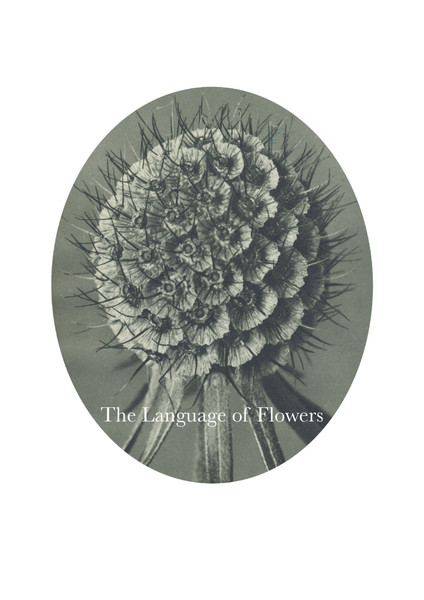 the-language-of-flowers_aa.pdf