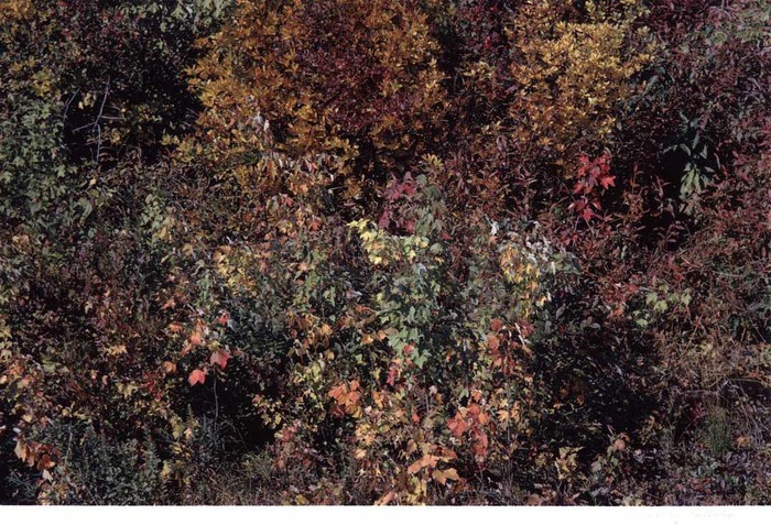 Leaves in Fall, Harry Callahan