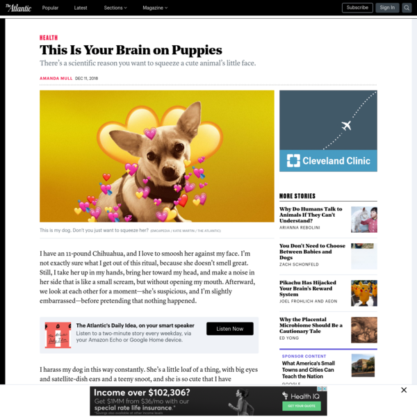 This Is Your Brain on Puppies