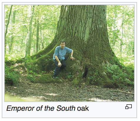 Emperor of the South (oak)