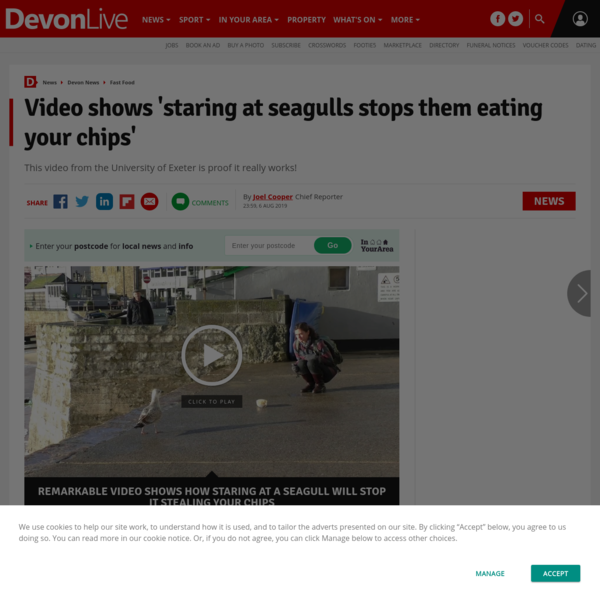 Video shows 'staring at seagulls stops them eating your chips'