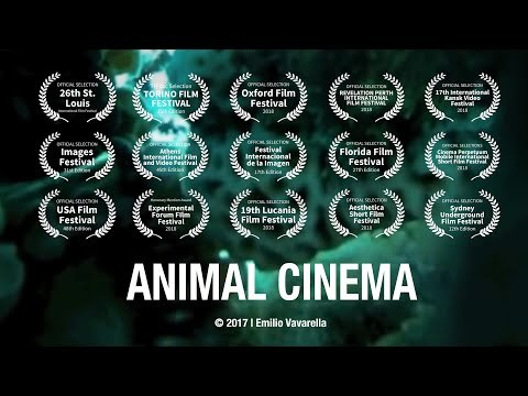 ANIMAL CINEMA - Trailer