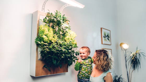 Herbert – Grow fresh organic food at home by Ponix Systems — Kickstarter
