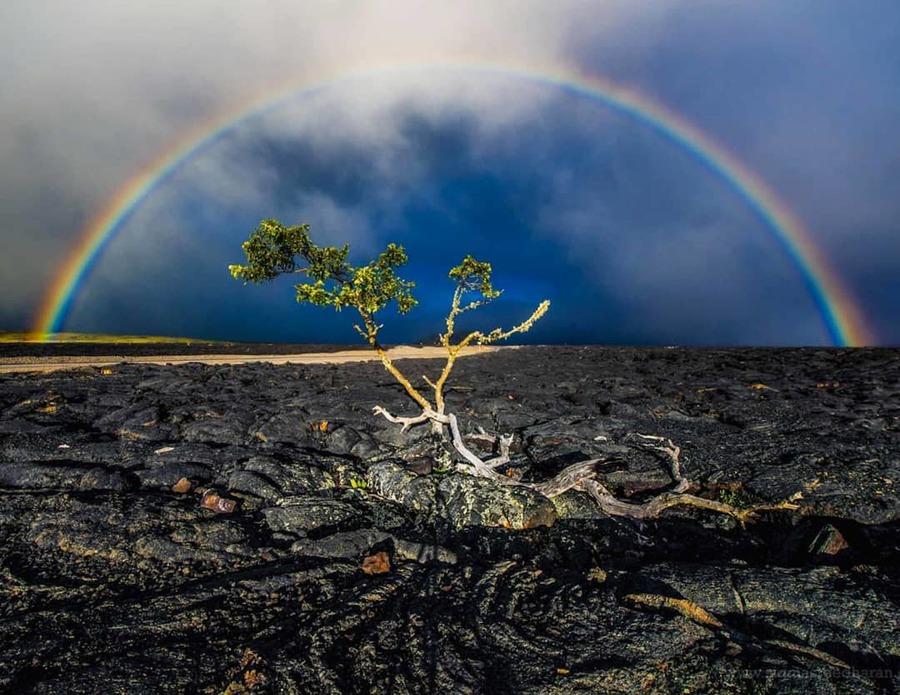Hawaii's Volcanoes National Park