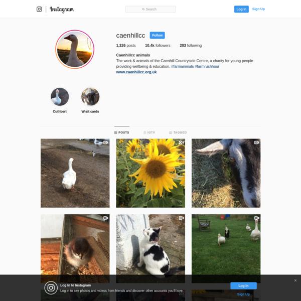 Caenhillcc animals (@caenhillcc) * Instagram photos and videos
