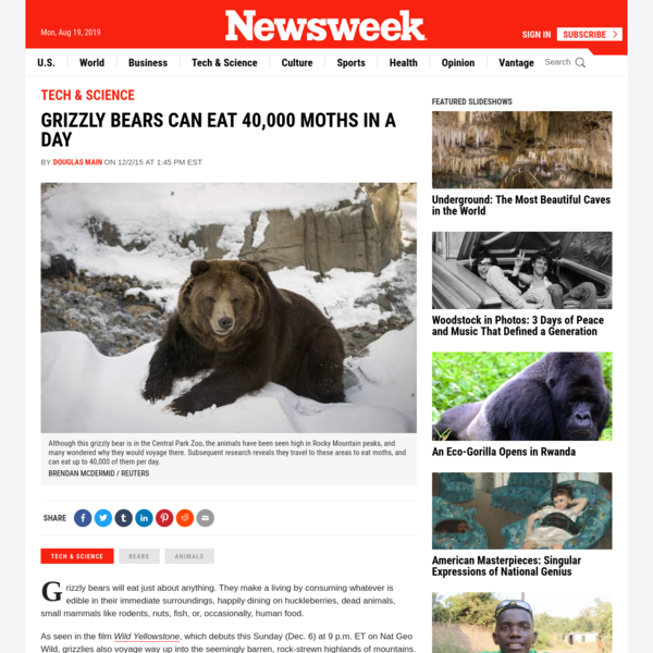 Grizzly Bears Can Eat 40,000 Moths in a Day