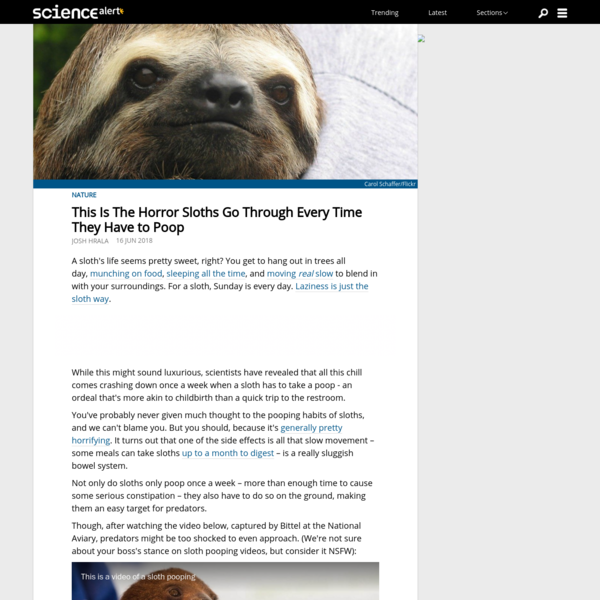 This Is The Horror Sloths Go Through Every Time They Have to Poop