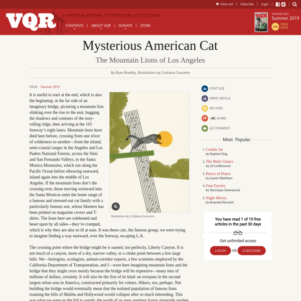 Mysterious American Cat