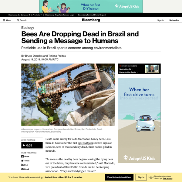 Bees Are Dropping Dead in Brazil and Sending a Message to Humans - Bloomberg