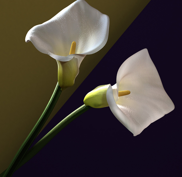 Flowers (Calla Lillies)