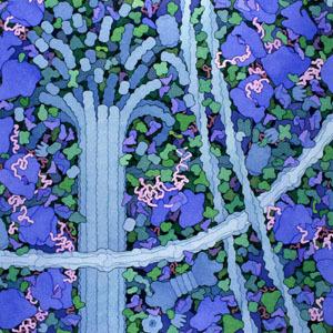 biosites-cytoplasm-icon.jpg