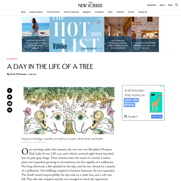A Day in the Life of a Tree