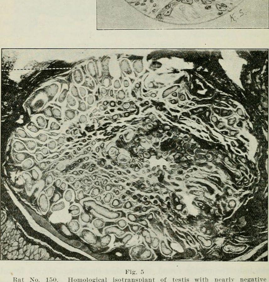 1024px-endocrinology_-1917-_-14597350639-.jpg