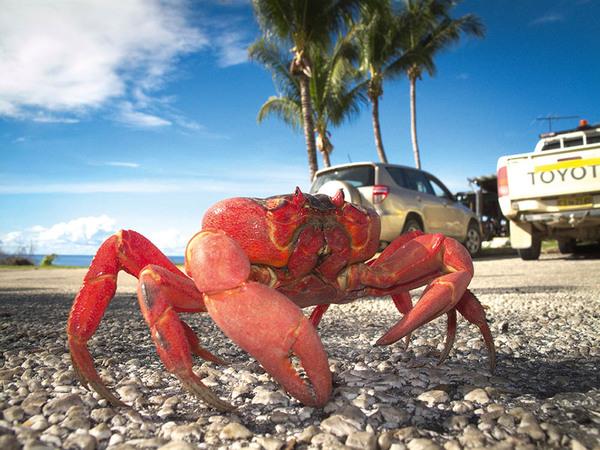 0718_christmas_red_crab.jpg