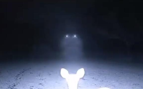 deer-ufo.jpg