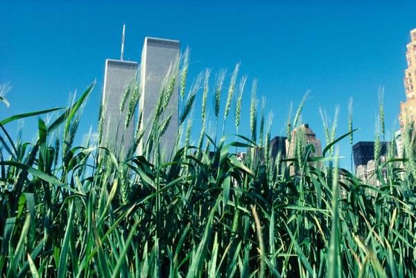 wheatfield_in_manhattan-282-29.jpg