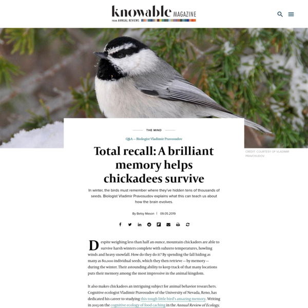 Total recall: A brilliant memory helps chickadees survive