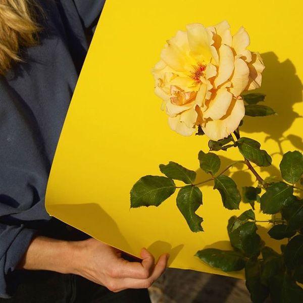 Berkley rose garden with @_lexivisco